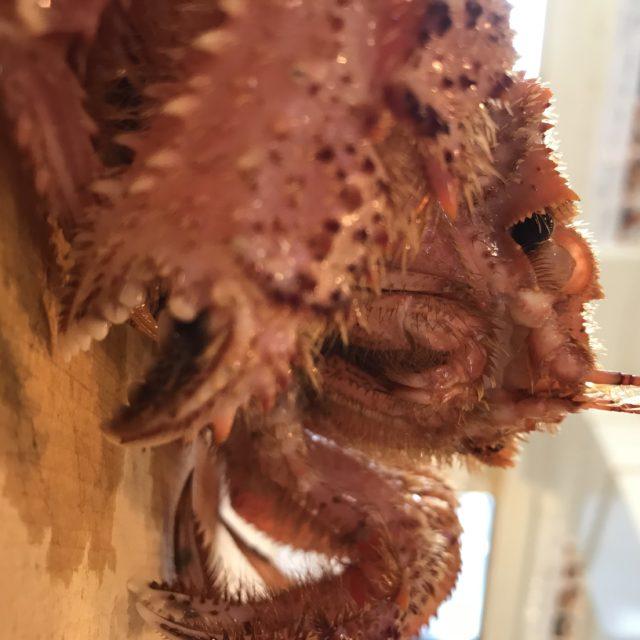 毛蟹姿茹での画像