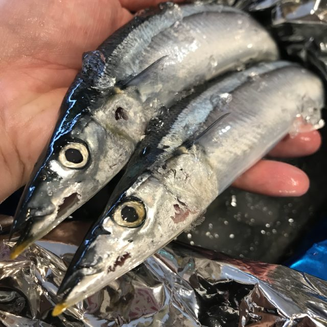 秋刀魚入荷の画像